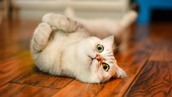 Study shows cats domesticated themselves