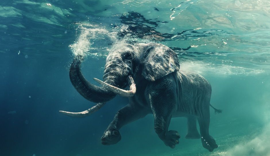 Sri Lanka Navy rescues wild elephants swept out to sea