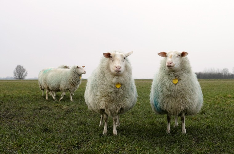 Baa Baa Land: The 'dullest movie ever' that will put you to 'sheep'